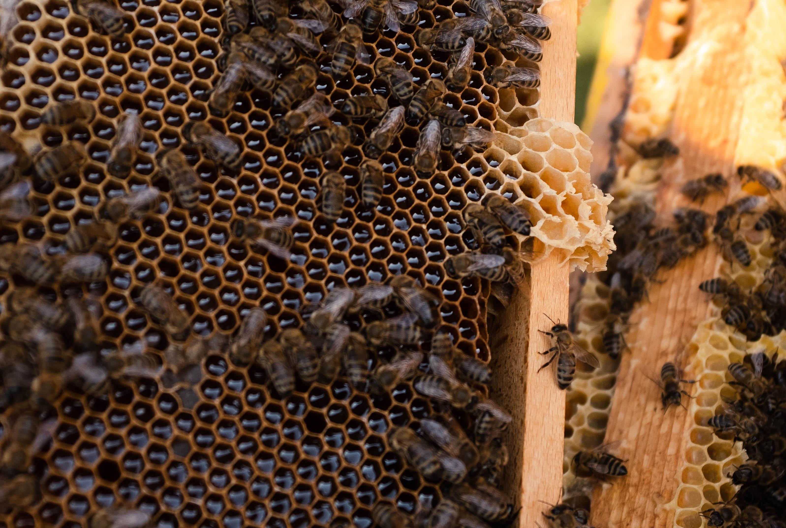 Nahaufnahme Bienenwaben mit Honig