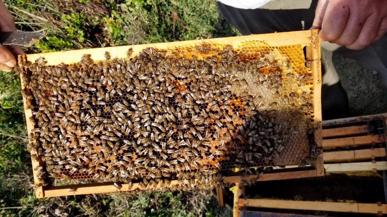 Beehives in Gjirokastra