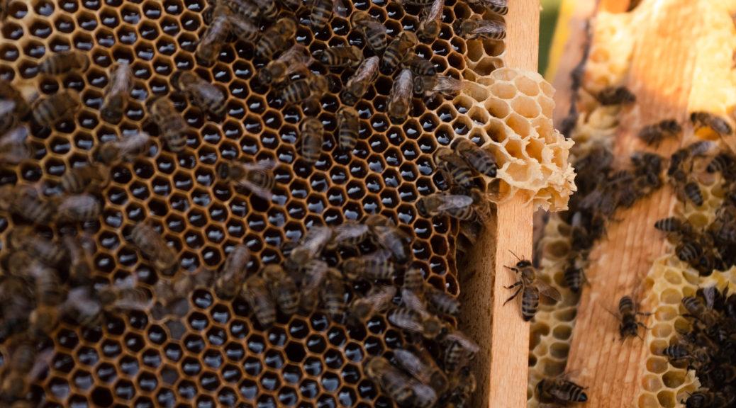Bienen im Rahmen