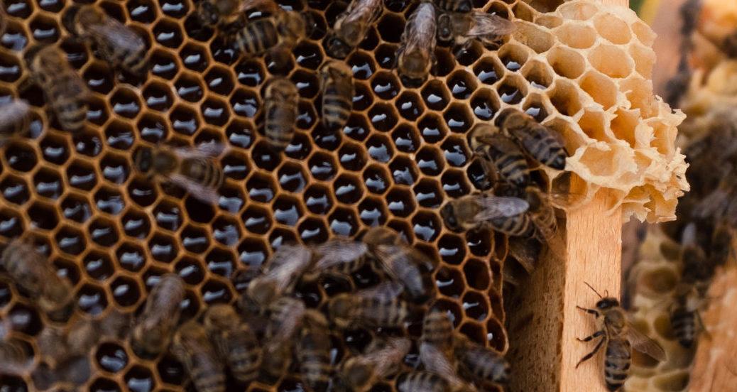Nahaufnahme von Bienen auf einem Wabenrähmchen